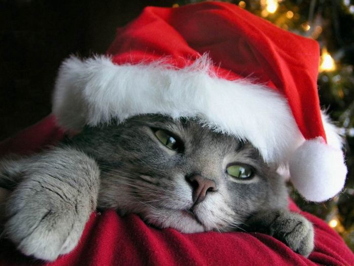 When You Feel Christmas is Not forYou